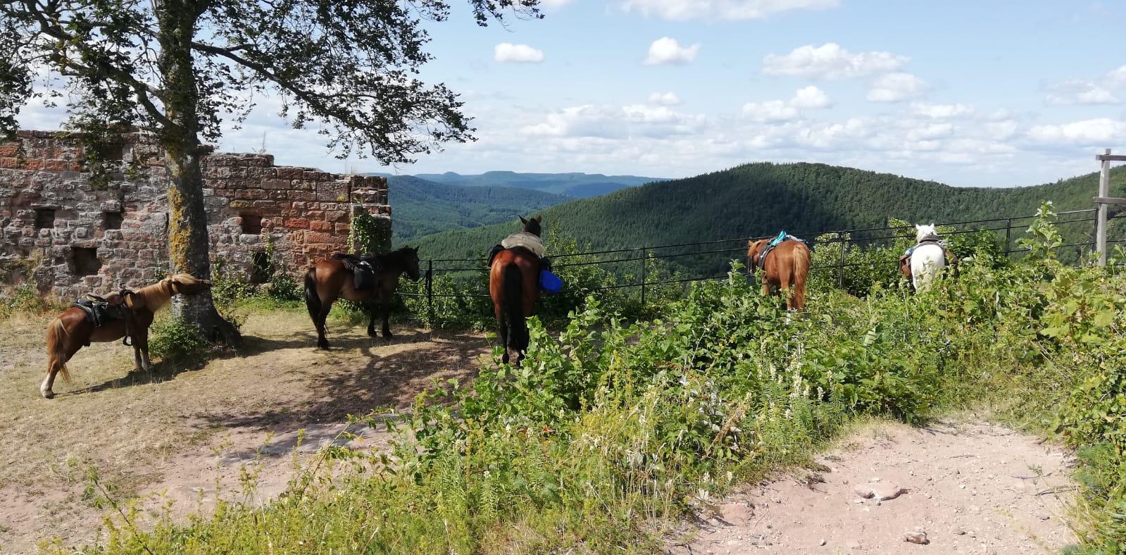 talking horse farm 3