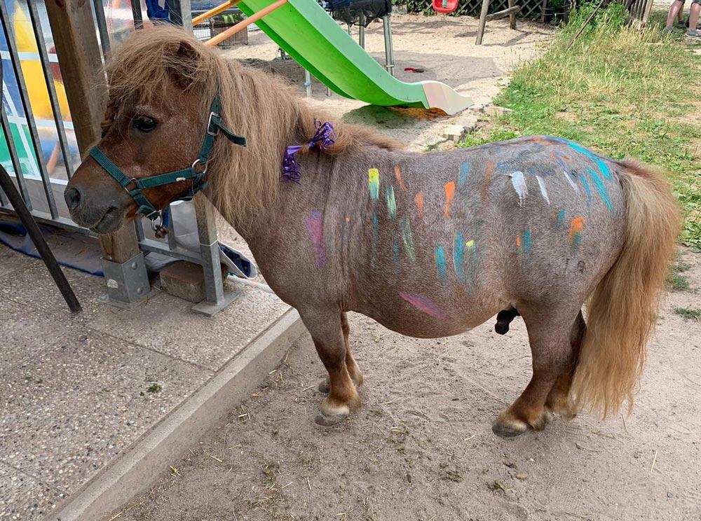 Kindergeburtstag_Talking_Horse_Farm_1